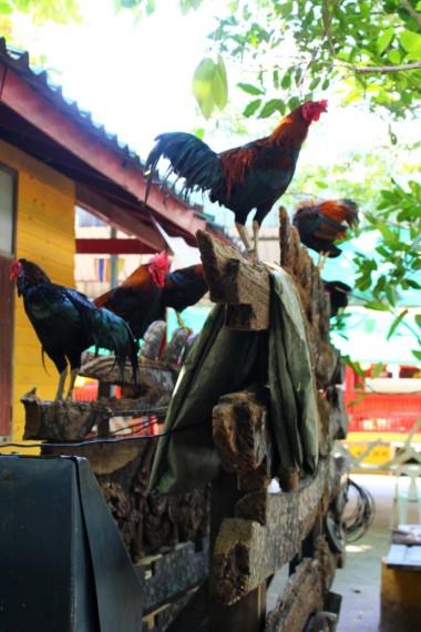 Thailand Travel Blog (57)