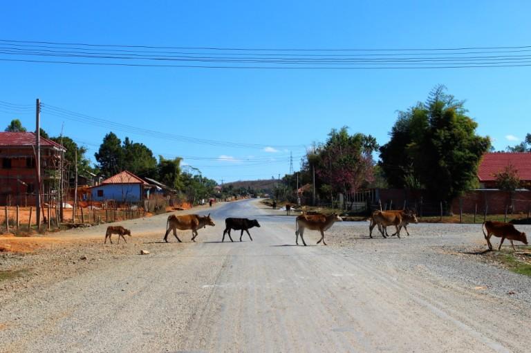 Laos Travel Blog (33)