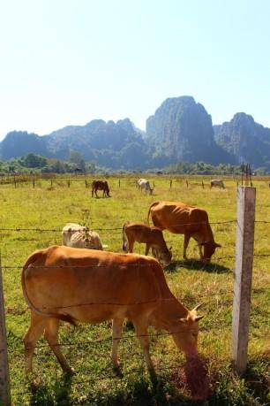 Laos Travel Blog (54)