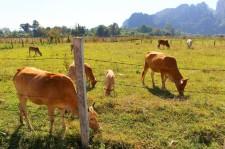 Laos Travel Blog (55)