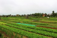Vietnam Travel Blog (133)