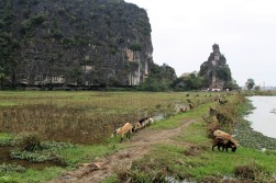 Vietnam Travel Blog 2 (42)