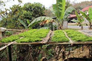 Laos Travel Blog 3 (104)