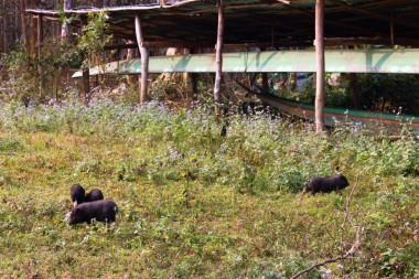 Laos Travel Blog 3 (123)