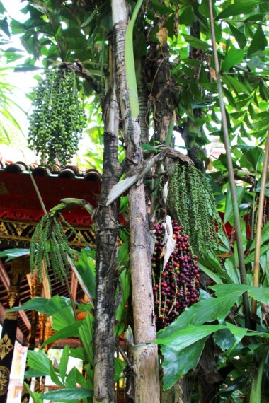 Bali Travel Blog (13)