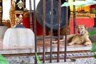 Bali Travel Blog (14)