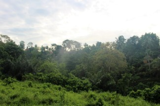 Bali Travel Blog (25)