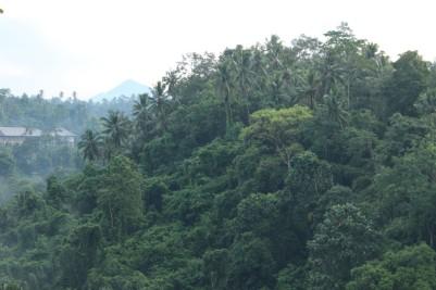 Bali Travel Blog (29)