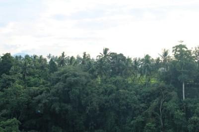 Bali Travel Blog (30)