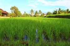 Bali Travel Blog (35)