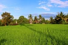 Bali Travel Blog (36)