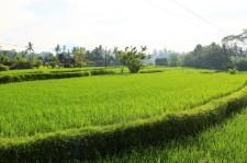 Bali Travel Blog (37)
