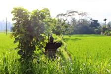 Bali Travel Blog (39)