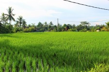 Bali Travel Blog (40)