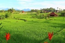 Bali Travel Blog (41)