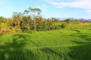 Bali Travel Blog (42)