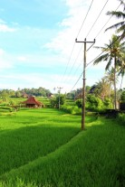 Bali Travel Blog (43)