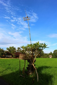 Bali Travel Blog (46)