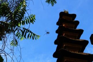 Bali Travel Blog (48)