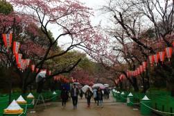 Tokyo Travel Blog (124)