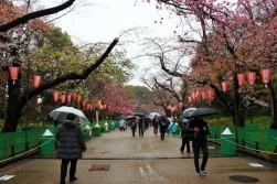 Tokyo Travel Blog (125)