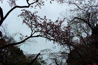 Tokyo Travel Blog (126)