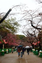 Tokyo Travel Blog (129)